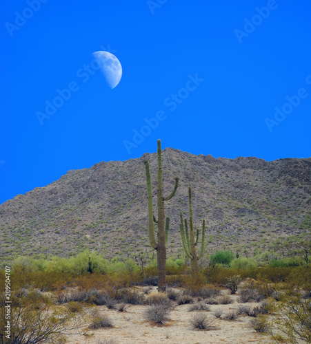 Plexiglas Herfst Sonora Desert Moon San Tan Mountains