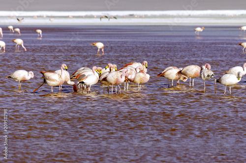 Fotobehang Lavendel Reddish lake with a group of flamingos feeding