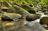 Fresh Water in Jungle - 209516356