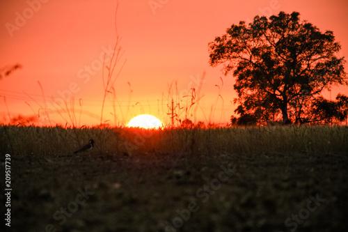 Aluminium Koraal Sunset at the village