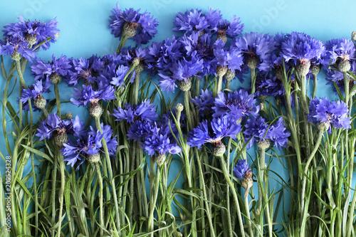 Leinwanddruck Bild Cornflowers on blue background
