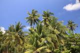 palmier et végétation tropical avec ciel bleu - 209524722