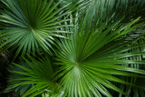 Exotic leaves background photo. Concept of flora and plants. - 209524924
