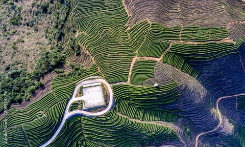 Aluminium Rijstvelden Aerial photography mountain tea plantation