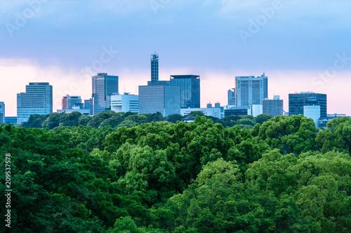Foto Murales 東京 夕方の日比谷公園と都心のビル群