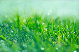 Grass with rain drops. Watering lawn. Rain. Blurred green grass background with water drops closeup. Nature. Environment concept - 209539761