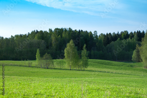 Plexiglas Pool Clear spring sky, farmland field with birches
