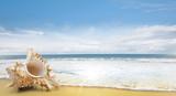 Muschel am Strand - 209546342