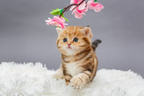 Little red kitten  and flower