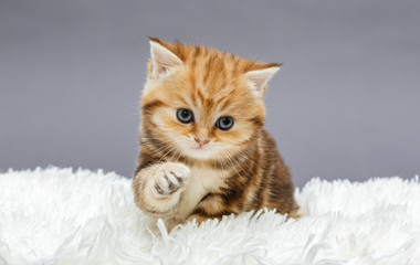 Little red kitten on a fur blanket