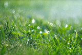 Grass with rain drops. Watering lawn. Rain. Blurred green grass background with water drops closeup. Nature. Environment concept - 209573943