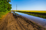 dirty rural road with water pond among a fields - 209604575