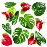 Jungle leaves - 209615124