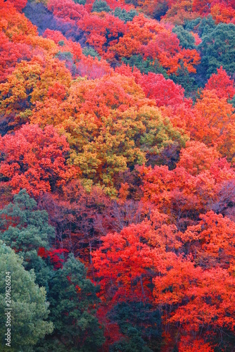 Aluminium Koraal 秋の山の公園の風景2