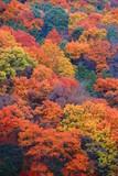 秋の山の公園の風景20