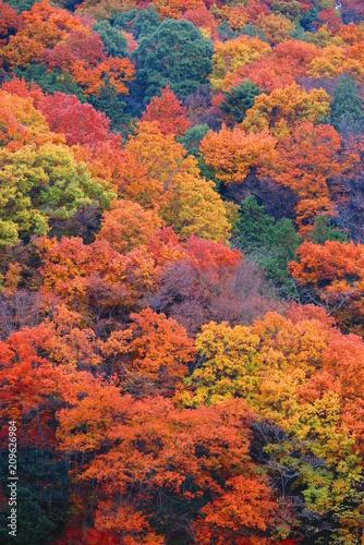 Foto Spatwand Baksteen 秋の山の公園の風景20