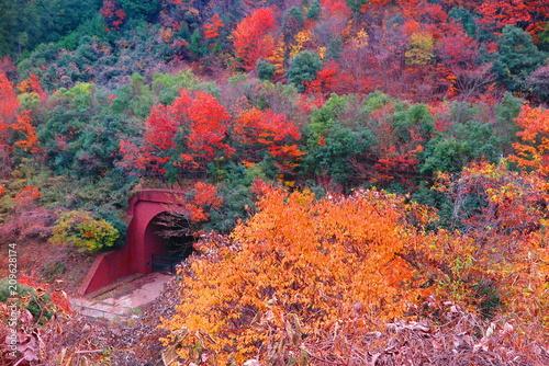 Fotobehang Crimson 秋の山の公園の風景23