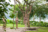 Three giraffes standing on sand and looking at camera in Zoo - 209642152
