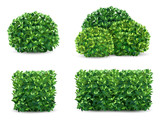 Vector bush in different forms. An ornamental plant shrub for the design of a park, a garden or a green fence. - 209646105
