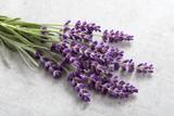 Lavender. - 209653990