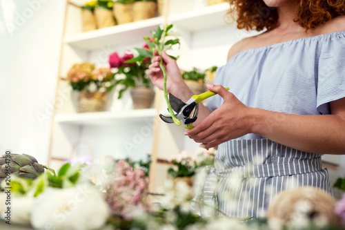 Foto Murales Gardening tools. Close up of a garden pruner being used for cutting a flower