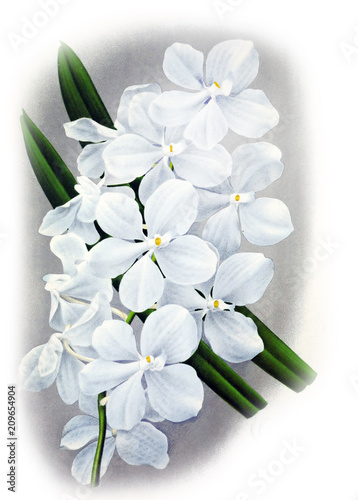 Illustration of orchid - 209654904