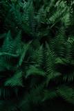 Tropical leaves. Floral design background. - 209660998