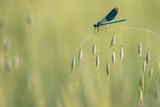 dragonfly with nice atmosphere - 209679906