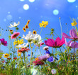 Leinwanddruck Bild - Blumenwiese - Sommer - Sommerwiese Hintergrund
