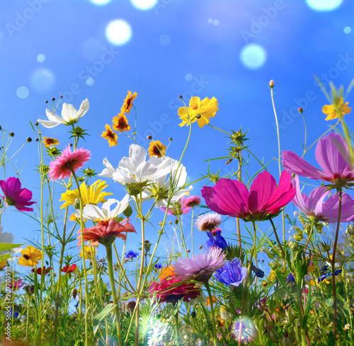 Leinwanddruck Bild Blumenwiese - Sommer - Sommerwiese Hintergrund