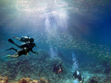 Scuba diving on coral reef underwater with rays light background. - 209715505