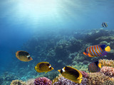 Underwater blue background in sea - 209715577