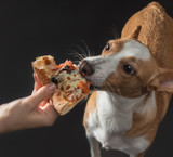 cat and dog are fed pizza - 209717991