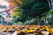 Colourful autumn leaves in the park