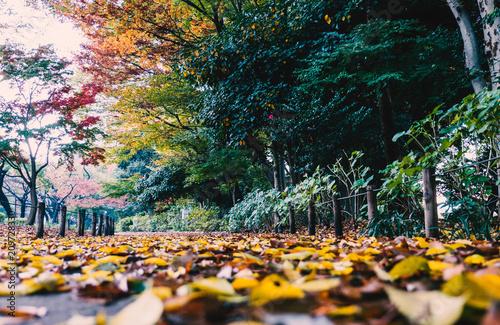 Aluminium Tokio Colourful autumn leaves in the park