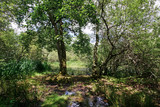 Fairies pond at spring season in Fontainebleau forest - 209729965