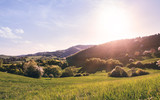 Panoramic view of landscape of meadows and woodland. Sunset in nature. - 209730301