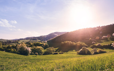 Panoramic view of landscape of meadows and woodland. Sunset in nature.