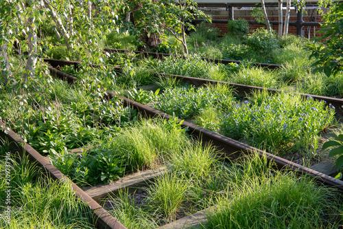 Aluminium Spoorlijn Overgrown railroad tracks at the High Line park in springtime in New York City