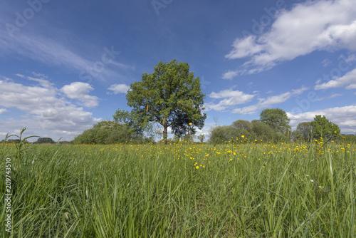 Foto Murales Prairie