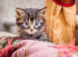 Little striped kitty looks from hideout during  game. Attractive kitten with blue eyes close-up_ - 209751926