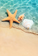 Quadro starfish and seashell on the summer beach in sea water.