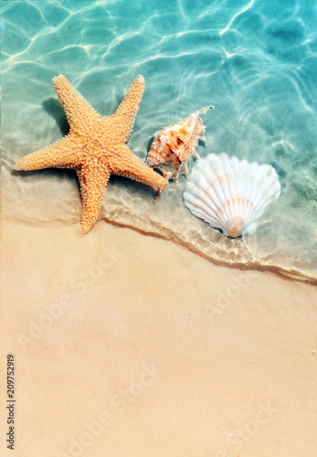 Foto Murales starfish and seashell on the summer beach in sea water.