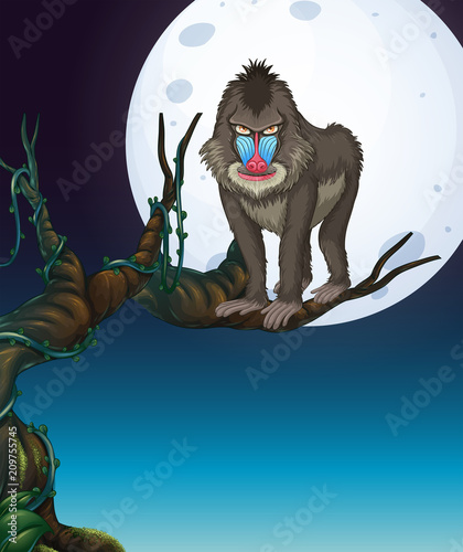 Fotobehang Kids A Baboon on the Tree Night Scene