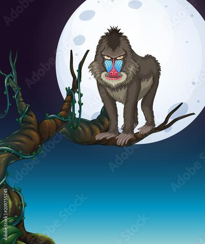 Naklejka A Baboon on the Tree Night Scene