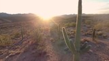 Catcus flyby in the Arizona desert at Sunset - 209764184