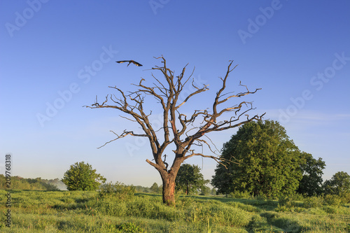 Fotobehang Lente Summer green nature landscape on clear day with old tree and bird in sky.