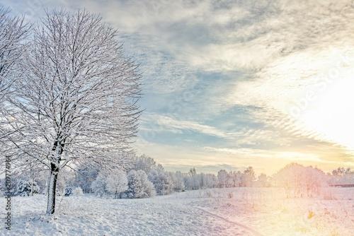 Foto Murales winter has been coming