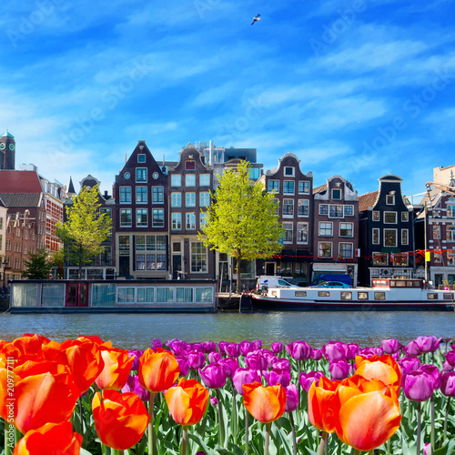 One of canals in Amsterdam with colored tulip flowers