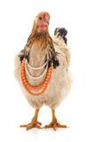 Chicken in a necklace. - 209777993